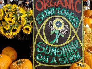 Organic Sunflowers and Pumpkins, Ferry Building Farmer's Market, San Francisco, California, USA by Inger Hogstrom