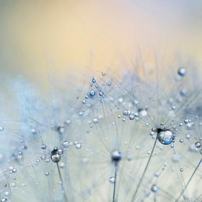 Ice Blue Copy by Ingrid Beddoes