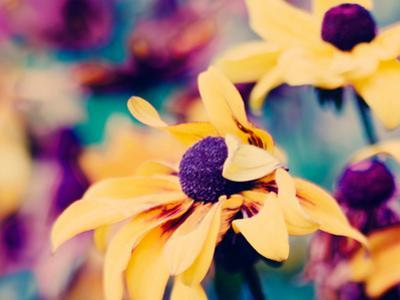 Mellow Yellow by Ingrid Beddoes