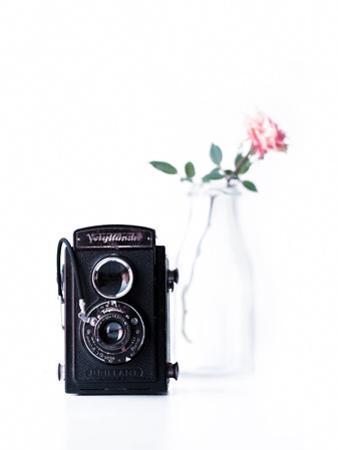 Vintage Rose by Ingrid Beddoes
