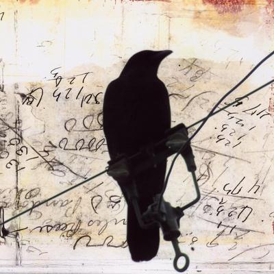What Crows Reveal I