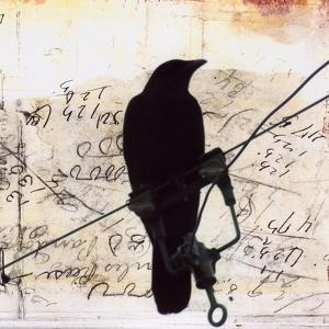 What Crows Reveal I by Ingrid Blixt
