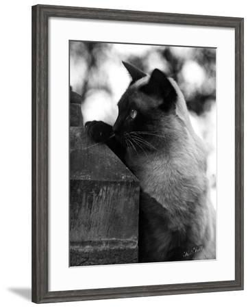 Inquisitive Siamese-Thomas Fall-Framed Photographic Print