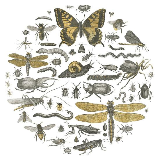 Insect Circle II-Wild Apple Portfolio-Art Print