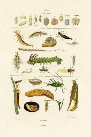 https://imgc.artprintimages.com/img/print/insects-1833-39_u-l-pvdwek0.jpg?p=0