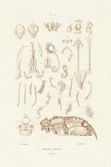 Insects, 1833-39--Giclee Print