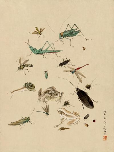 Insects and Toads--Art Print