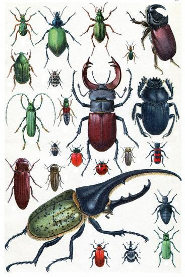 Insects, Beetles and Scarab, Vintage Engraved Illustration. La Vie Dans La Nature, 1890.-Morphart Creation-Art Print