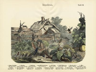 Insects, C.1860--Giclee Print