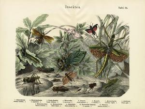 Insects, C.1860