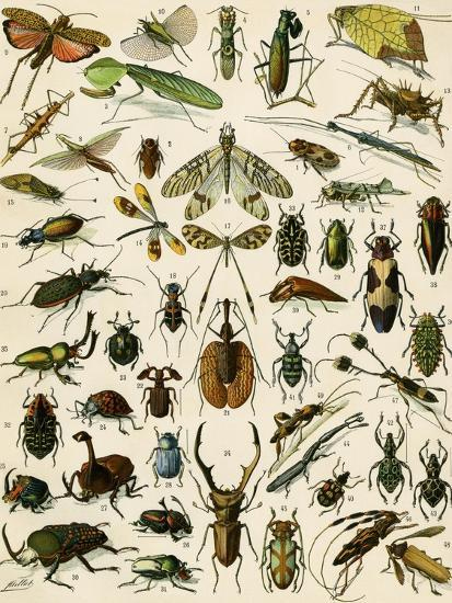 Insects, Including Beetles--Giclee Print