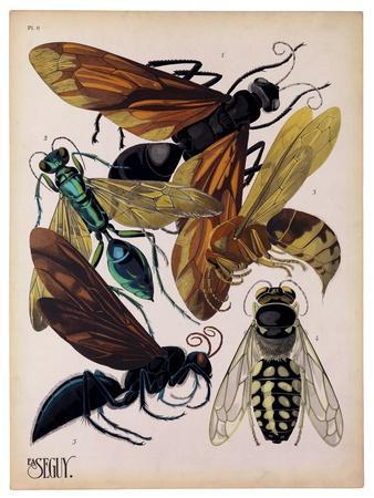 https://imgc.artprintimages.com/img/print/insects-plate-15_u-l-psfmh30.jpg?p=0