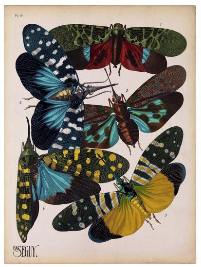 Insects, Plate 8--Giclee Print