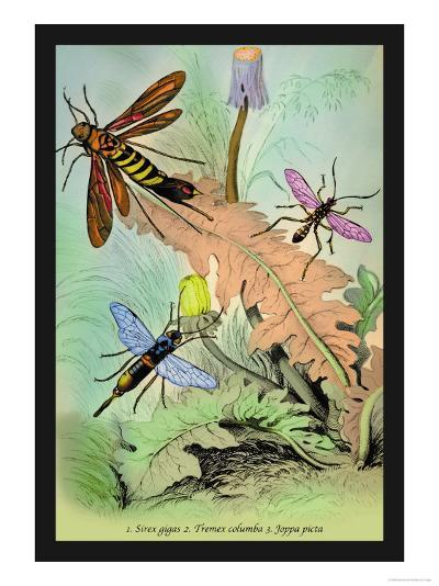 Insects: Sirex Gigas, Tremex Columba and Joppa Picta-James Duncan-Art Print