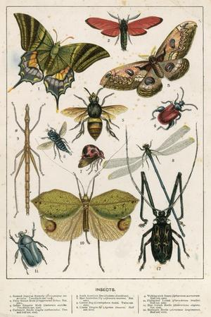 https://imgc.artprintimages.com/img/print/insects_u-l-pjqdgp0.jpg?p=0