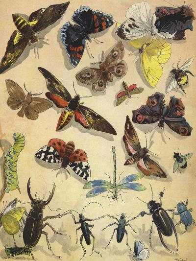 Insects-Richard Andre-Giclee Print