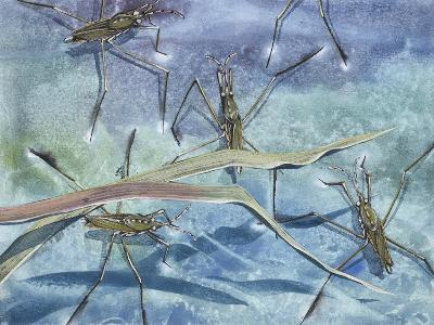Insects--Giclee Print