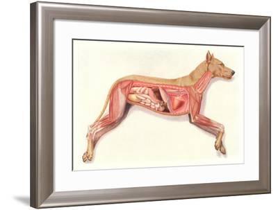 Inside a Dog--Framed Art Print