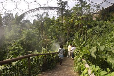 Inside the Humid Tropics Biome, Eden Project, Near St Austell, Cornwall-Peter Thompson-Photographic Print
