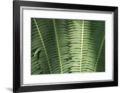 Inside the Palm House in the Main Observatory at Longwood Gardens-Scott Warren-Framed Photographic Print