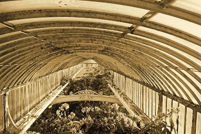 Inside the Palm House, Kew Gardens, London--Photographic Print