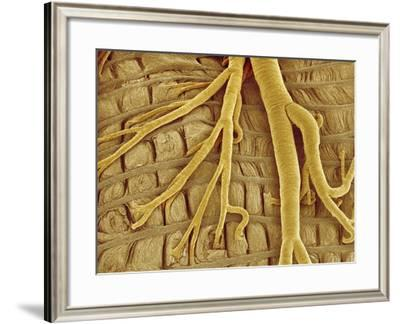Interior of moth larva-Micro Discovery-Framed Photographic Print