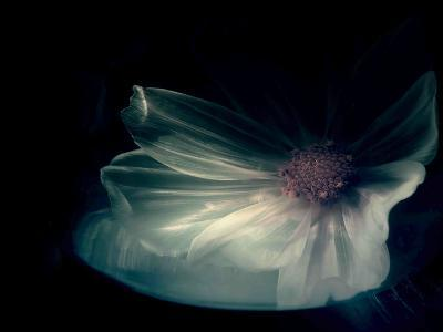 Interior Sweetness-Philippe Sainte-Laudy-Photographic Print