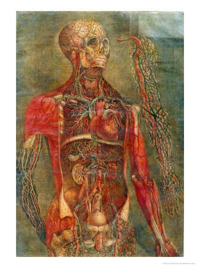 Internal Organs of the Body, Anatomy of the Visceras Dissected, Painted and Engraved Gautier, 1745-Jacques Fabien Gautier d'Agoty-Giclee Print