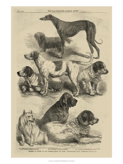 International Dog Show I--Art Print