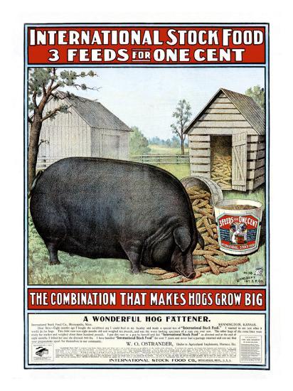 International Hog Swine Feed--Giclee Print