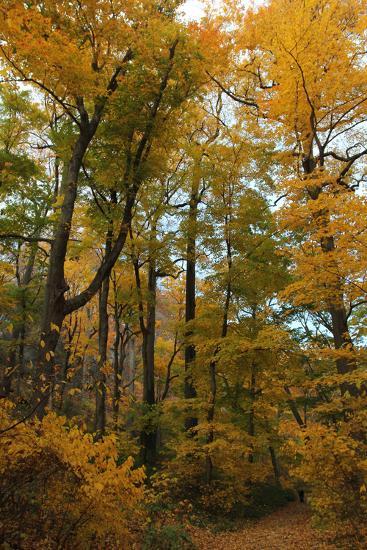 Inwood Park Fall Vertical-Robert Goldwitz-Photographic Print