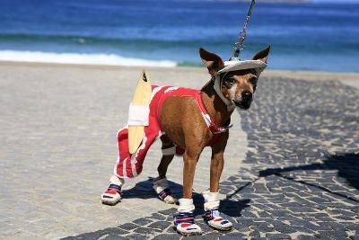 Ipanema Surfer Dog-OSTILL-Photographic Print