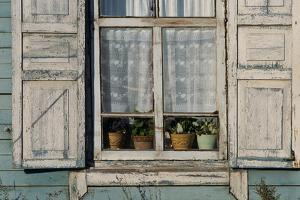 A window with potted plants and lace curtains. by Ira Block