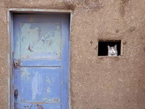 Next to a Blue Door, a Cat Peers Out of the Window of an Adobe House by Ira Block