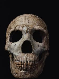 This Neandertal Skull from Wadi Amud is About 60,000 Years Old by Ira Block