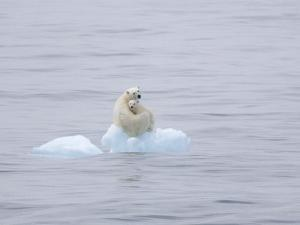 Polar Bear and Cub on a Floating Chunk of Ice by Ira Meyer