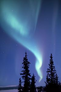 The Aurora Borealis, or Northern Lights, over Silhouetted Evergreen Trees by Ira Meyer
