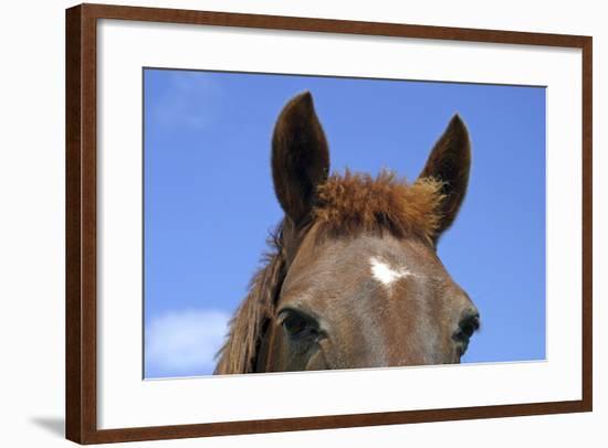 Ireland. Close-Up of Horse Face-Kymri Wilt-Framed Photographic Print