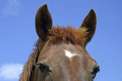 Ireland. Close-Up of Horse Face-Kymri Wilt-Photographic Print