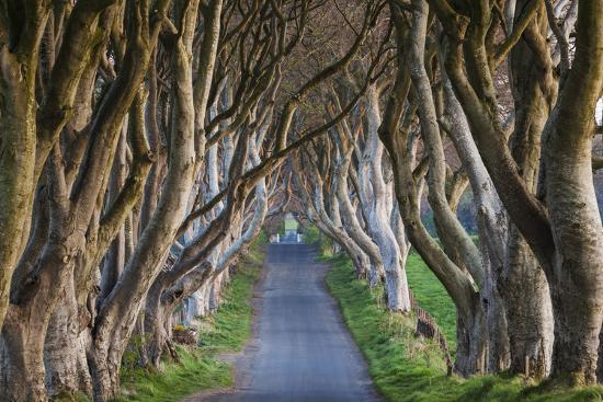 Ireland, County Antrim, Ballymoney, The Dark Hedges road-Walter Bibikow-Premium Photographic Print