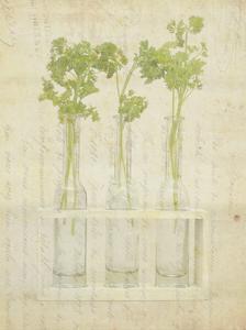 Herb Still Life I by Irena Orlov