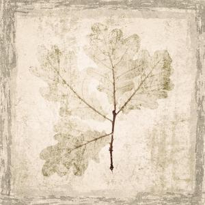 Stone Leaf III by Irena Orlov
