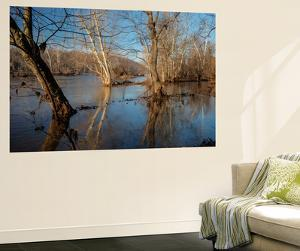 A Winter Morning Along the Potomac River Inside the Beltway by Irene Owsley