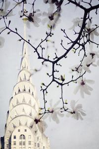 Architectural Spring I by Irene Suchocki