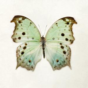 Butterfly Impression by Irene Suchocki