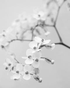 Delicate I by Irene Suchocki