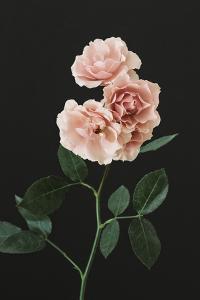 Floral Fantasy by Irene Suchocki