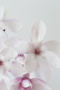 Inami by Irene Suchocki