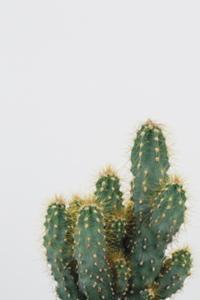 Izolta by Irene Suchocki