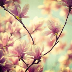 Magnolia Bloom I by Irene Suchocki